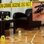 """La """"zanzarologia"""": una nuova scienza forense?"""