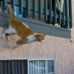 Gatto cade dall'ottavo piano e ferisce un passante: a processo la proprietaria