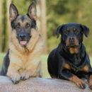Maltrattava i suoi due cani: dopo aver svolto un lavoro di pubblica utilità gli verranno restituiti